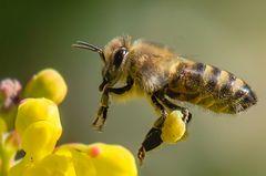 Ich weiß, ich bin nervig - mit meinen Bienen/Wespen