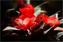... ich weiß nicht was es für 'ne Blume ist, fand sie aber fotogen ;-)