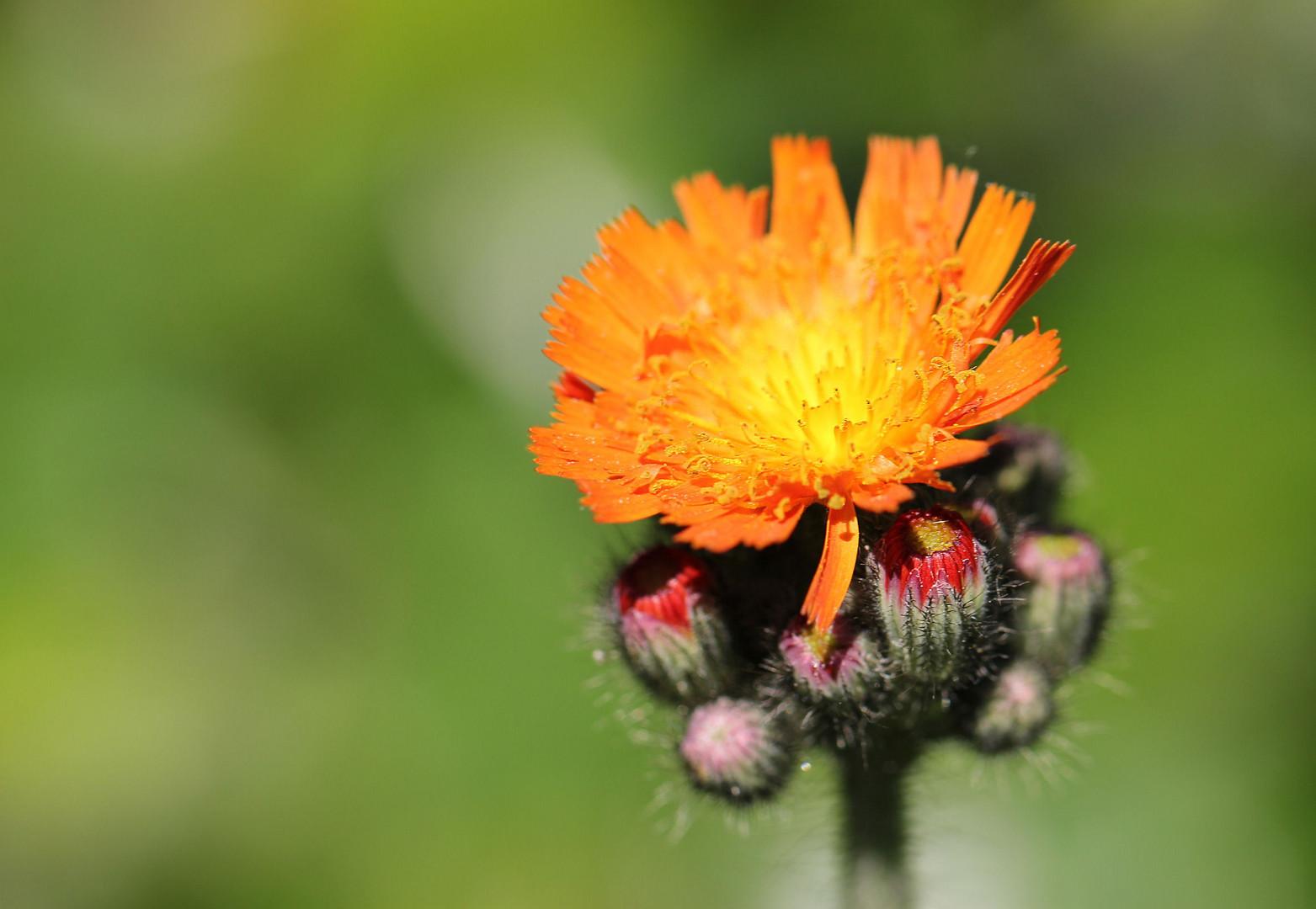 Ich weiß nicht wie diese kleine Pflanze heißt :)