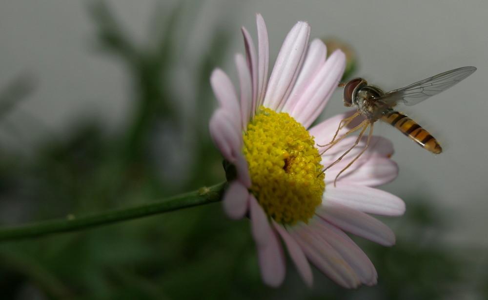 Ich will endlich wieder Sommer... :-) Und keine Blattläuse mehr... ;-)))