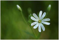 Ich will Frühling......JETZT!