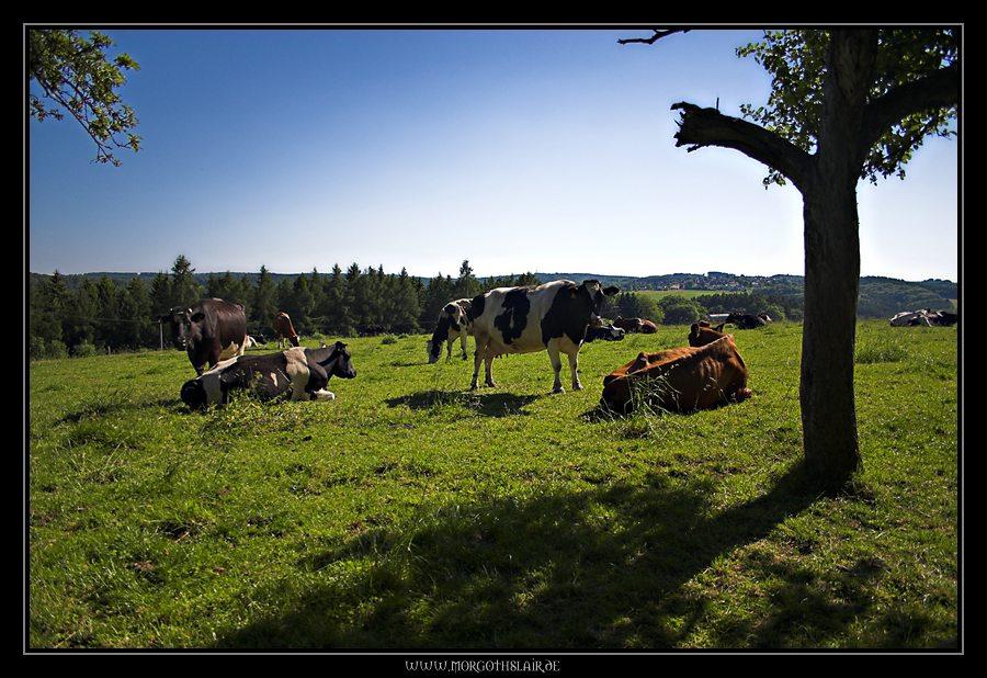 Ich will Kühe ^-^