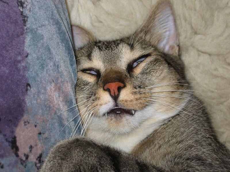 Ich will nur schlafen.......!
