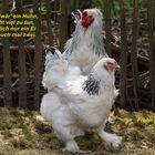 Ich wollt', ich wär' ein Huhn