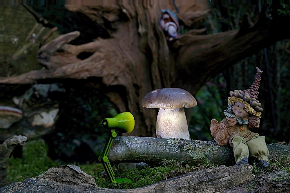 Ich wollte auch mal Pilze anleuchten - reload