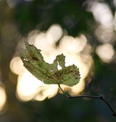 Ich wünsche ALLEN einen sonnigen Herbstsonntag...(1219)