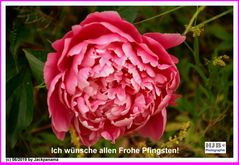 Ich wünsche allen Freunden der Fotocommunity: Frohe Pfingsten!