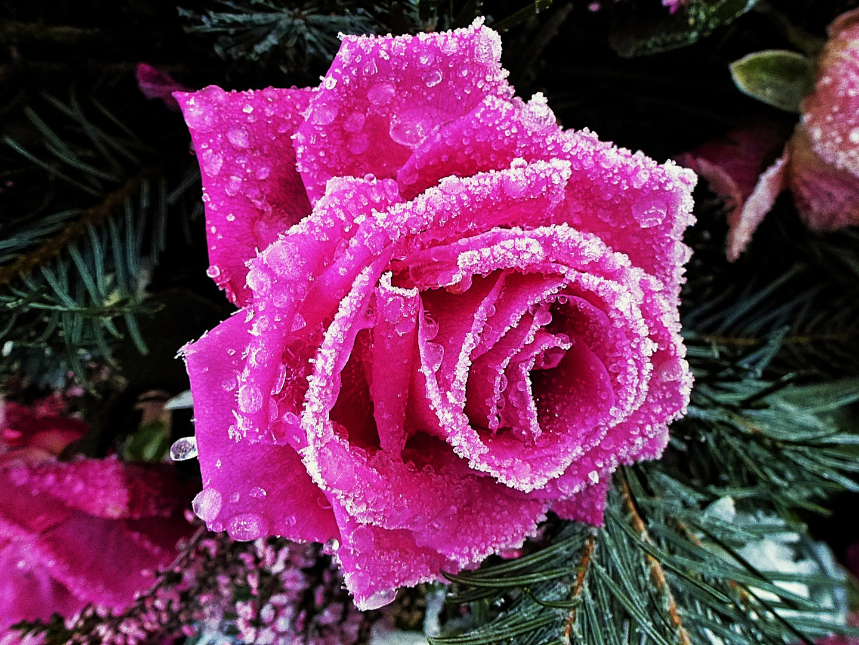 Ich wünsche allen fröhliche Weihnachten Foto & Bild | pflanzen ...