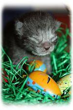 ....Ich wünsche Euch allen ein schönes Osterfest!