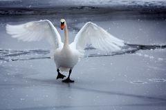 Ich wünsche Euch allen einen guten Rutsch ins Neue Jahr 2011