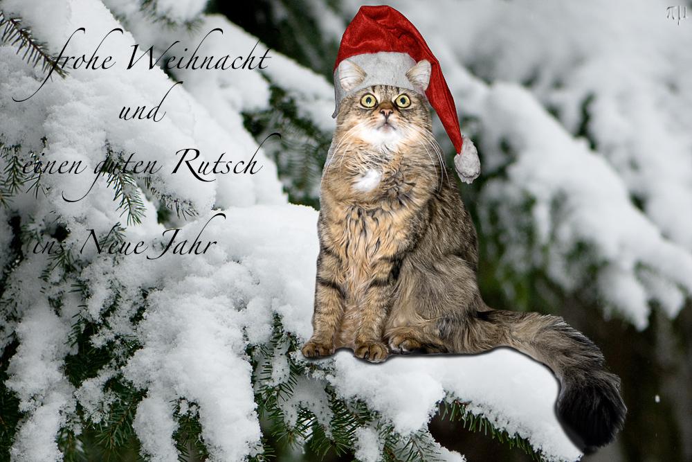 ich wünsche euch ein wunderschönes weihnachtsfest und einen guten ...