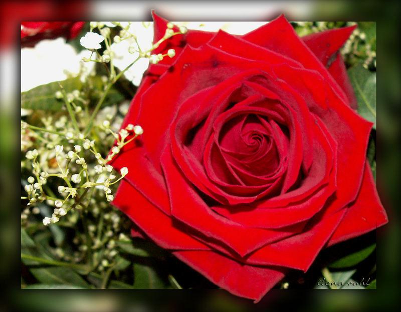 Ich Wünsche Euch Morgen Einen Schönen Valentinstag Foto Bild
