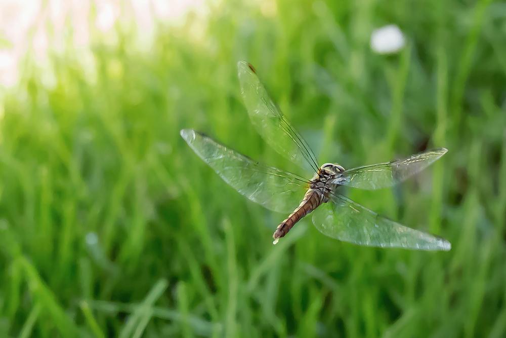 Ich würde auch so gerne Fliegen können :-)