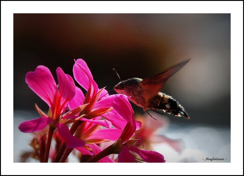 Ici station de nectar +