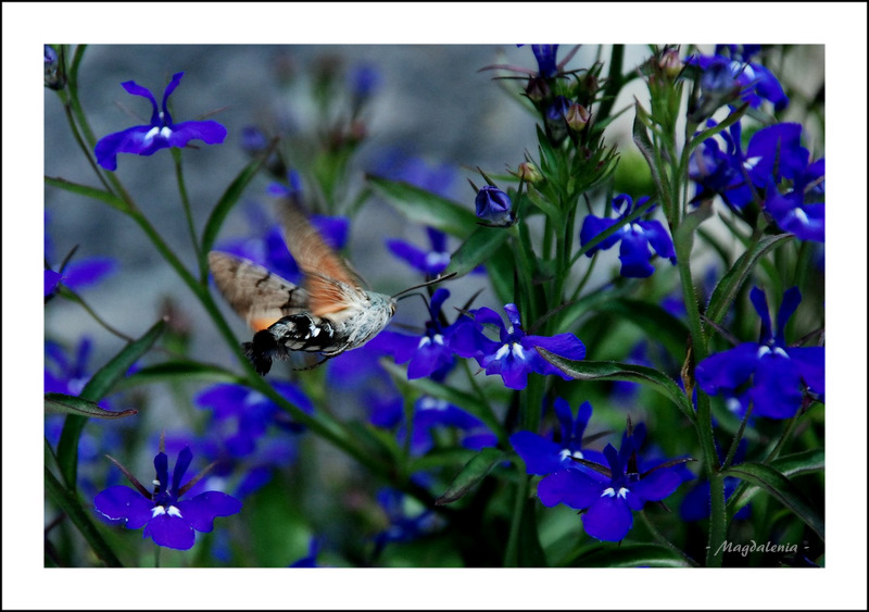 Ici station de nectar