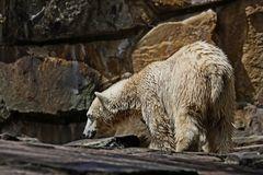 Ick bin ein Bärliner...