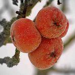 Icy Fruit