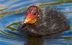 … Idealbesetzung für den Wasservogel-Nikolaus …