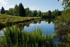 Idylle am See - der Moorweiher