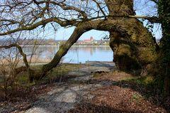 Idylle auf der Insel  Reichenau II