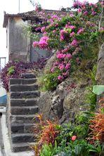 Idylle auf Madeira