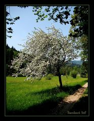 Idylle im Schwarzwald