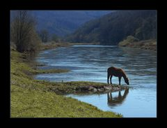 Idylle mit Fluss-Pferd... (...am Reinhardswald...)