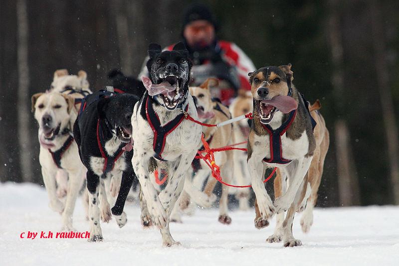 IFSS Schlittenhundeweltmeisterschaften 2007 Gafsele/Schweden