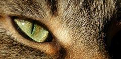 Igly's Auge