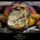 Iguana on Galápagos Island