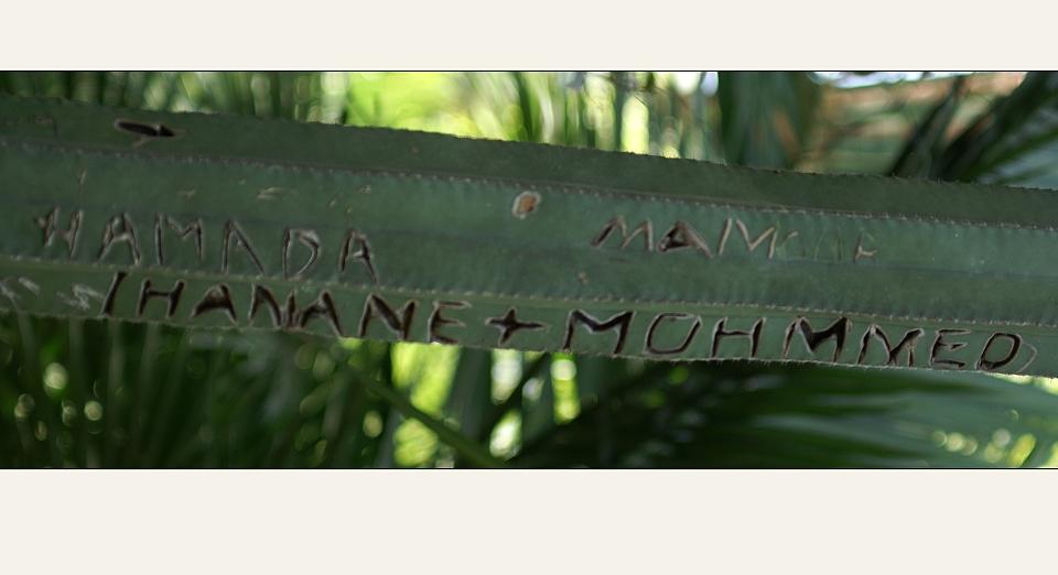 IHANANE + MOHMMED