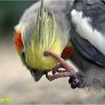 Ihr habt alle an Vogel.....