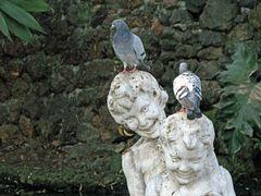 ihr habt ja einen Vogel......