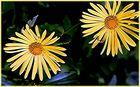 Ihre Blütentage...