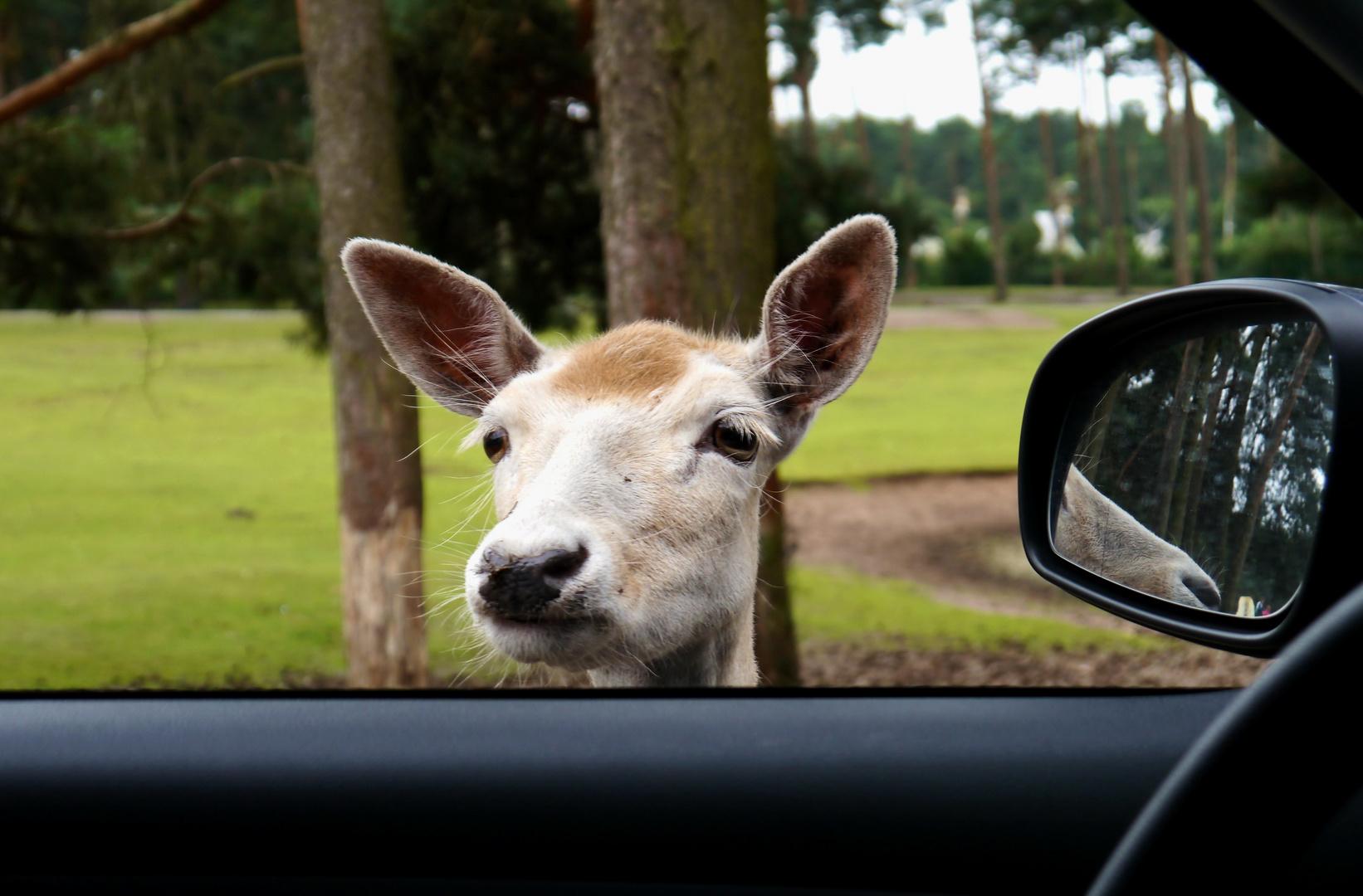 """""""Ihren Führerschein und Ausweis bitte!"""""""