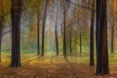 II -Autumn- II