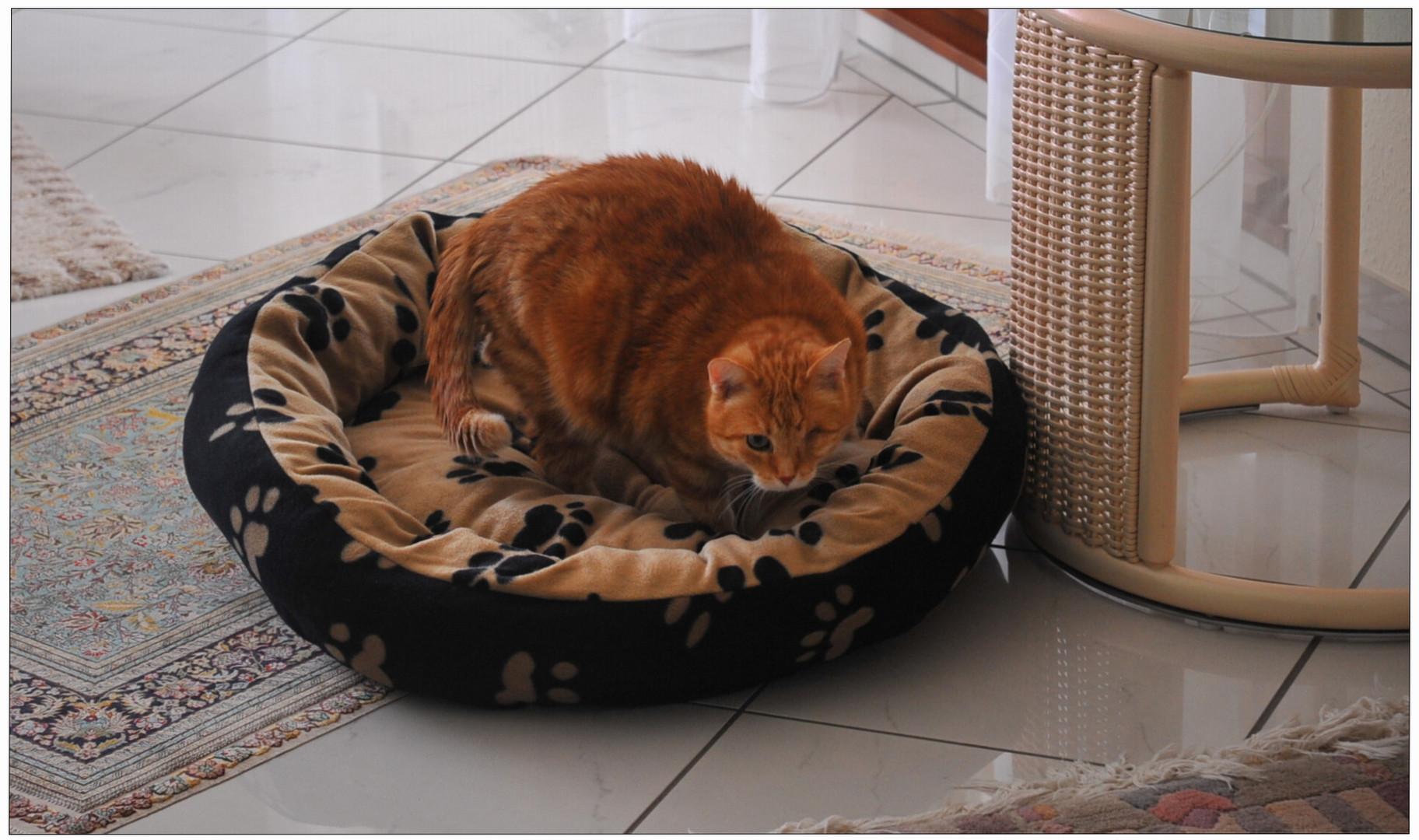 (II.) Das zweite Bett ... ((II.) la segunda cama ...)