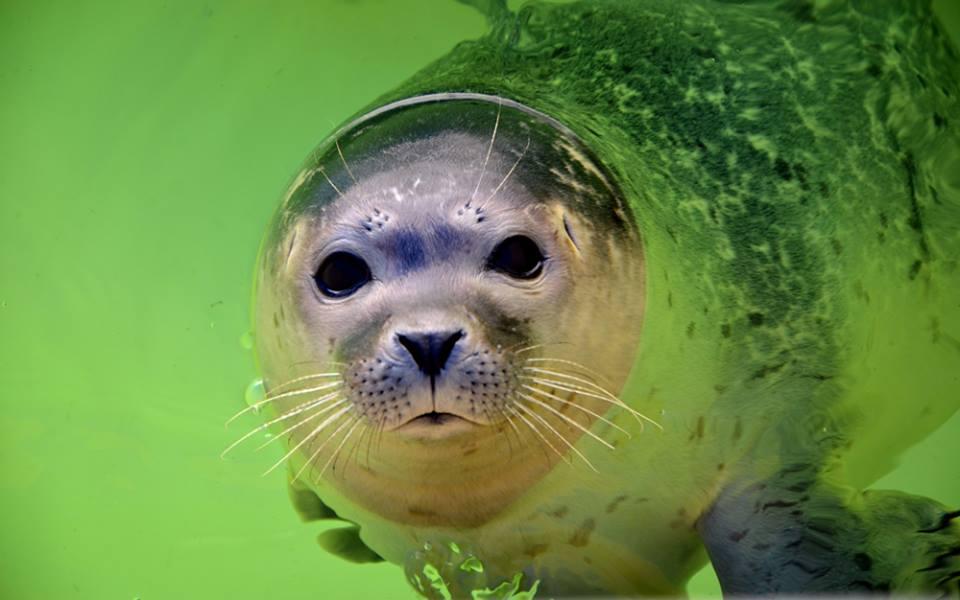 Ik hou van zeehonden!