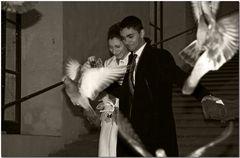 Il ballo nuziale delle colombe