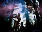 Il bosco degli elfi guerrieri