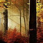 il bosco delle fate....