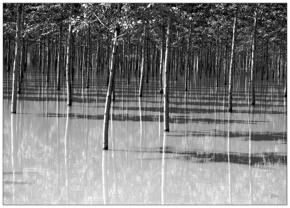 Il bosco parallelo-BN