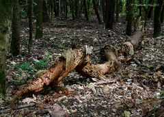 Il bosco si rinnova
