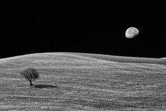 Il campo sotto la luna