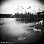 il cane che cammina sul lago