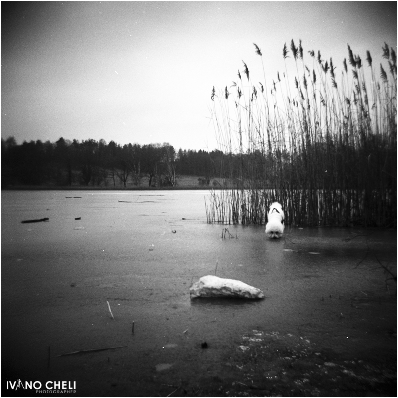 il cane che cammina sul lago(2)