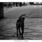 Il cane che passeggia