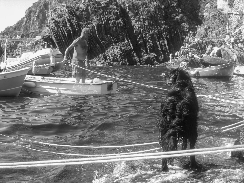 Il cane e il mare