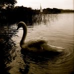 Il cigno di Trakai (lituania)