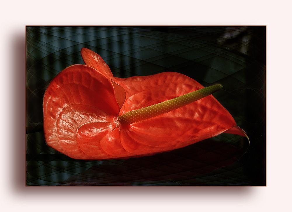 Il colore dell'amore.......